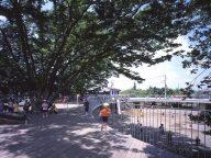 Fuji Kindergarten 6