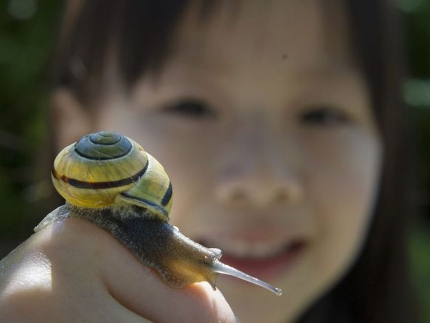 Checking out a yellow garden snail in Richmond last year is Elsa Lee 4. MARK VAN MANEN / PNG FILES